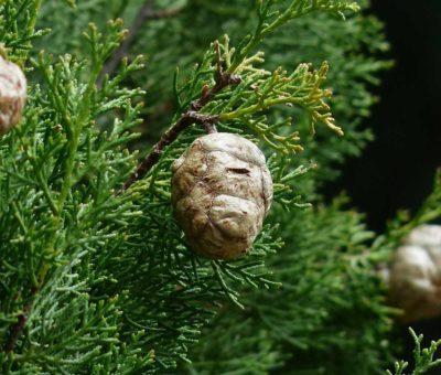 Mejores plantas para jardines franceses [Top 10] - Paisajismo Digital