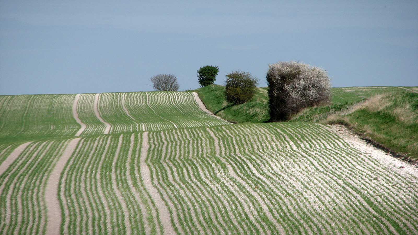 A fold in the hills - Maya Lin