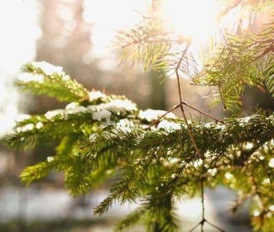 Jardín en temporada invernal