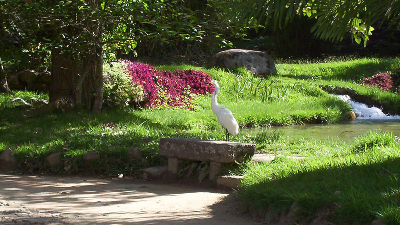 Animales en el Jardín de Río