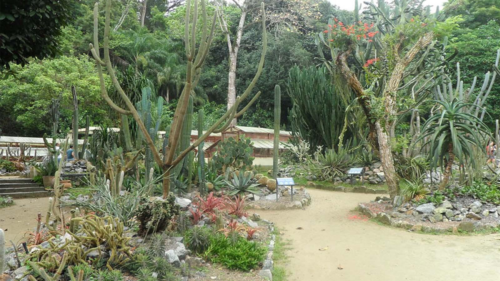 Jardín botánico de Río 2