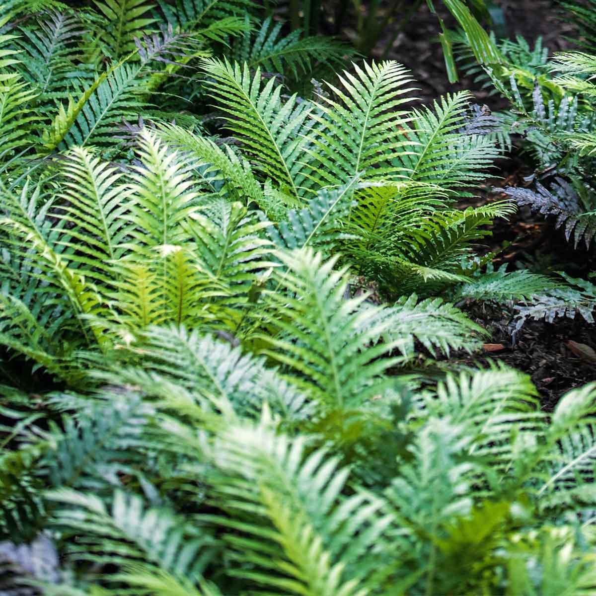 plantas mediterraneas jardines verticales paisajismo digital
