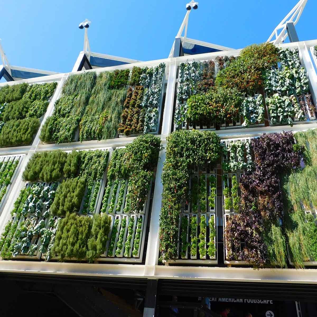 Plantas mediterráneas para jardines verticales