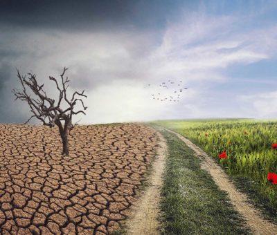 Cambio climático en tu jardín: cómo influir positivamente en él