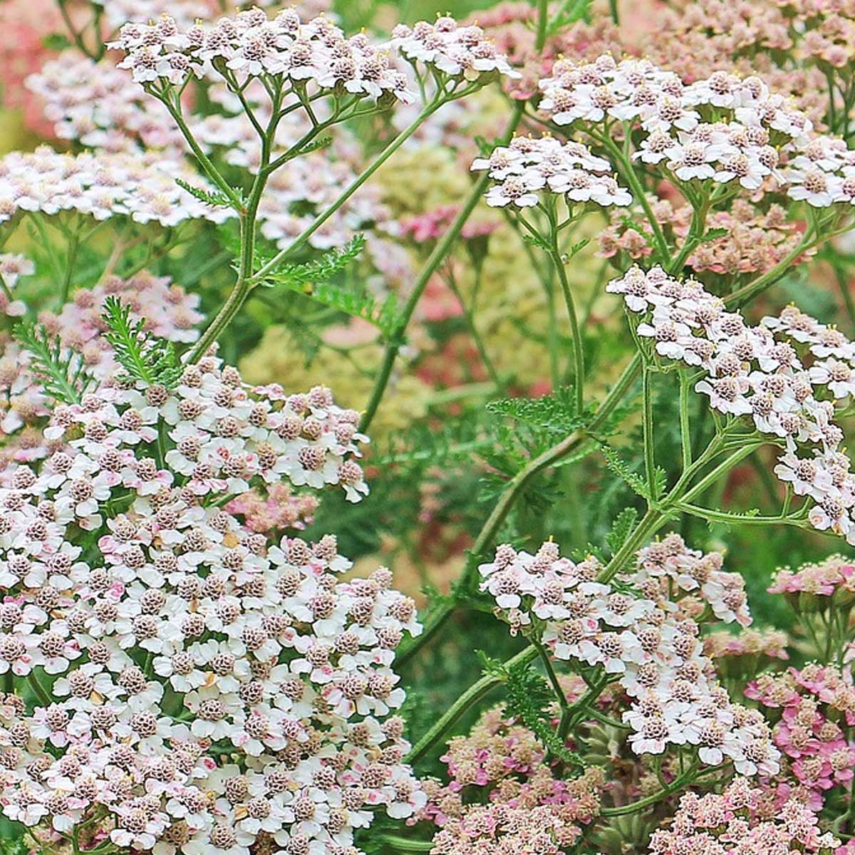 Jardines en primavera: Qué sembrar, cuidados y recomendaciones
