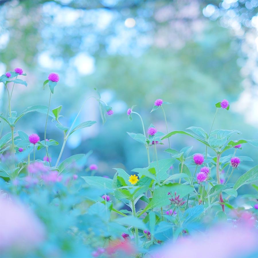 Plantas aromáticas de exterior 3