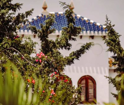 Arbustos mediterráneos ornamentales [Los 5 más decorativos]