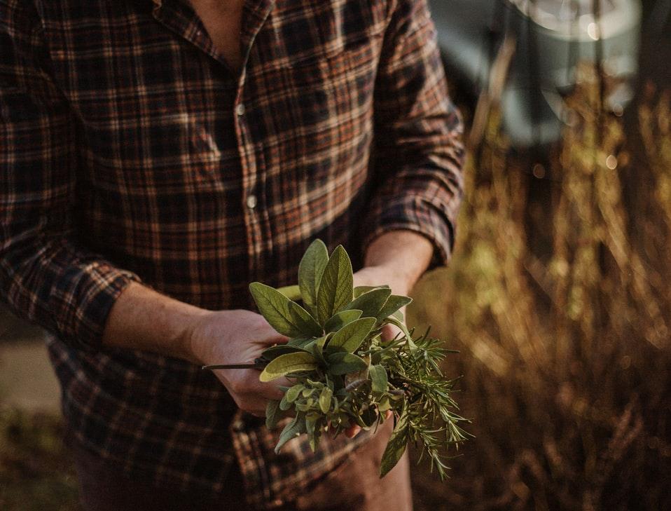 Plantas para un jardín de aromáticas