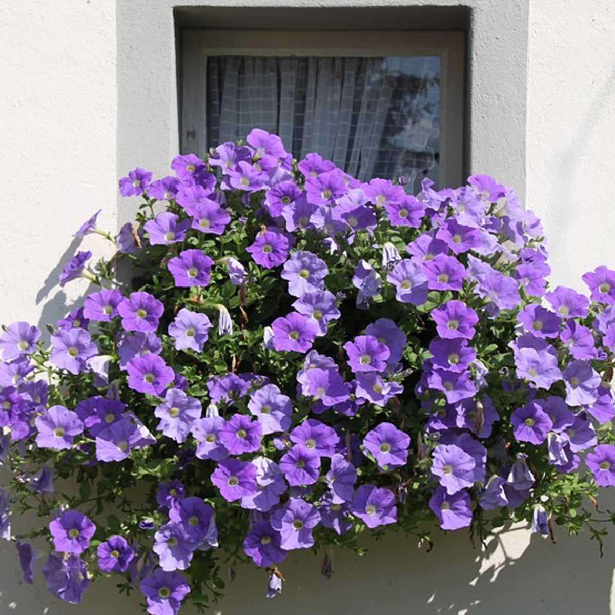 Jardines en balcones: Mejores plantas para crearlos